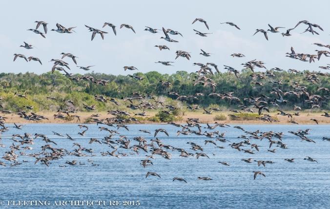 Florida 2013 Merritt Island 21